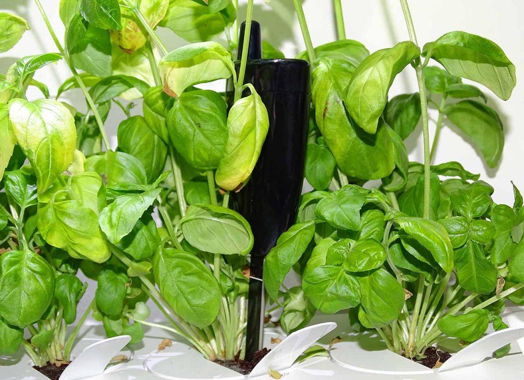 La sonde au coeur des plantes