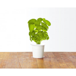 Recharge triple de Basilic pour jardin d'intérieur Smart Garden 3 - Click and Grow