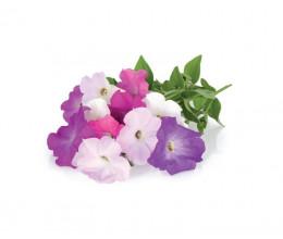 Recharge triple de Pétunias pour jardin d'intérieur Smart Garden 3 - Click and Grow